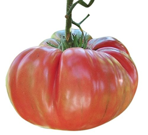 Marde Ross & Company  1 Organic Pink Brandywine Tomato Seeds - Heirloom Large Tomato - One of The Most Delicious Tomatoes for Home Growing