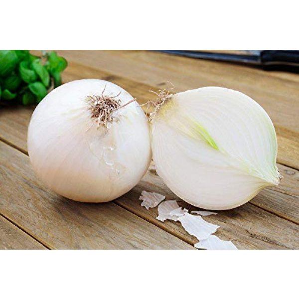 SeedsUA Heirloom Seed 6 Seeds Onion White Queen Giant Vegetable Heirloom Ukraine
