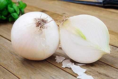 SeedsUA  6 Seeds Onion White Queen Giant Vegetable Heirloom Ukraine