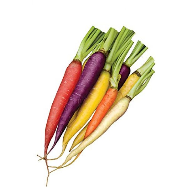 Isla's Garden Seeds Heirloom Seed 4 Rainbow Blend Carrot Seeds, 500+ Premium Heirloom Seeds, Rare Varieties, Colorful Mix & Fantastic Addition to Your Garden! (Isla's Garden Seeds), 85% Germination Rate, Non GMO, Highest Quality