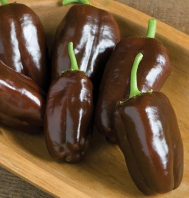 David's Garden Seeds  1 David's Garden Seeds Pepper Bell Sweet Chocolate 5796 (Brown) 50 Non-GMO