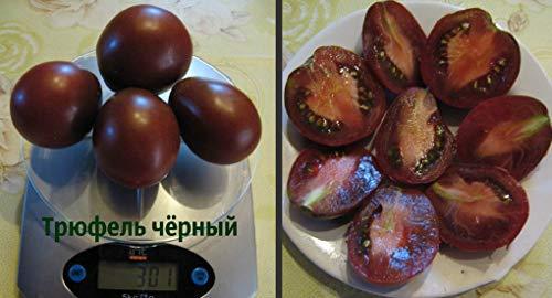SeedsUA  4 Seeds Tomato Black Truffle Vegetable Heirloom Ukraine