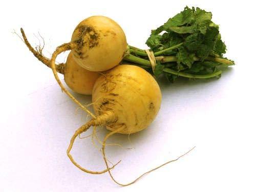Isla's Garden Seeds  1 Golden Ball Turnip Seeds