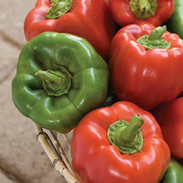 Burpee Heirloom Seed 5 Burpee California Wonder' Heirloom Sweet Red & Green Large Stuffing Bell Peppers, 300 Seeds