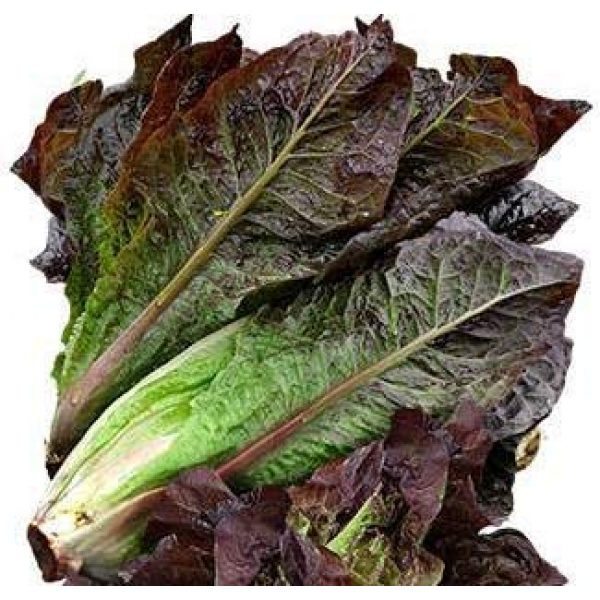 Isla's Garden Seeds Heirloom Seed 1 Red Romaine Lettuce Seeds (Super Red), 1000+ Premium Heirloom Seeds, A Fantastic Addition to Your Lettuce Garden! (Isla's Garden Seeds), Non GMO Survival Seeds, 99.7% Purity