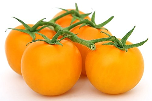 Marde Ross & Company  1 Organic Golden Jubilee Tomato Seeds - Large Tomato - One of The Most Delicious Tomatoes for Home Growing