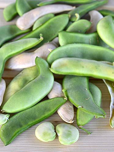 100+ Premium Heirloom Seeds