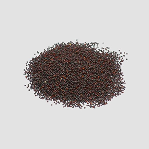 5GallonBucketHydro  2 Organic Kale Seeds - Red Russian Kale (150+ Seeds)