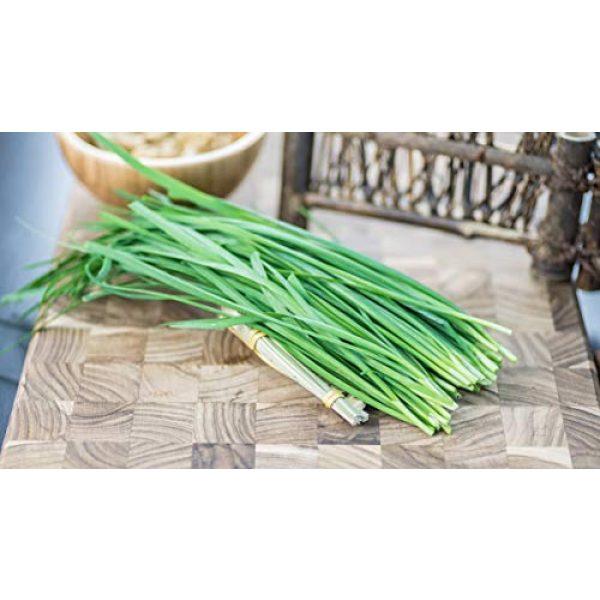 Fertile Ukraine Seeds Heirloom Seed 6 Seeds Chives Onion Green Vegetable Heirloom Ukraine