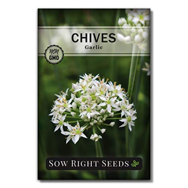 Sow Right Seeds Heirloom Seed 1 Sow Right Seeds - Garlic Chives Seeds for Planting - Non-GMO Heirloom Seeds; Instructions to Plant and Grow a Kitchen Herb Garden, Indoor or Outdoor; Great Gardening Gift (1)