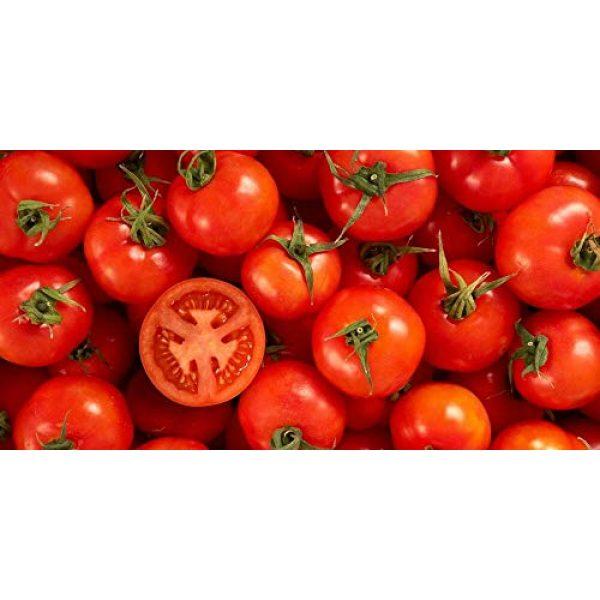Isla's Garden Seeds Heirloom Seed 3 Ace 55 Heirloom Tomato Seeds, 150+ Premium Heirloom Seeds, Delicious Flavor! Top Seller, Lycopersicon esculentum, (Isla's Garden Seeds), Non GMO, 90% Germination, Highest Quality