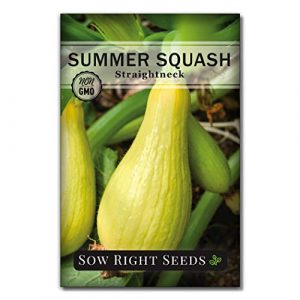 Sow Right Seeds Heirloom Seed 6 Sow Right Seeds - Zucchini Squash Seed Collection for Planting - Black Beauty, Grey, Round Zucchinis and Yellow Straightneck Summer Squash, Non-GMO Heirloom Seeds to Plant a Home Vegetable Garden