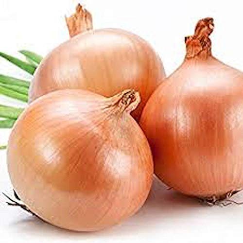 Isla's Garden Seeds  1 Texas Early Grano Onions Seeds
