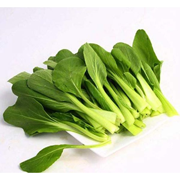 Business sasha Organic Seed 1 Each Pack 200+ Seeds Heirloom Healthy Organic Vegetable Chinese Cabbage Pakchoi Seeds (3)