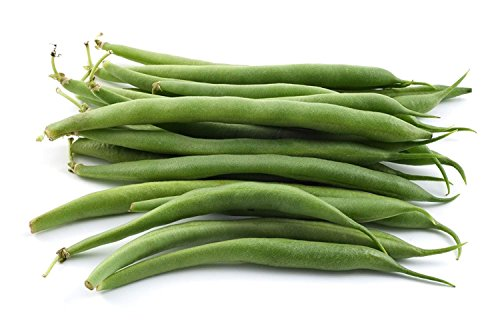 David's Garden Seeds  4 David's Garden Seeds Bean Bush Provider SL8723 (Green) 100 Non-GMO