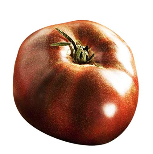 Marde Ross & Company  1 Organic Black Brandywine Heirloom Tomato Seeds - Large Tomato - One of The Most Delicious Tomatoes for Home Growing