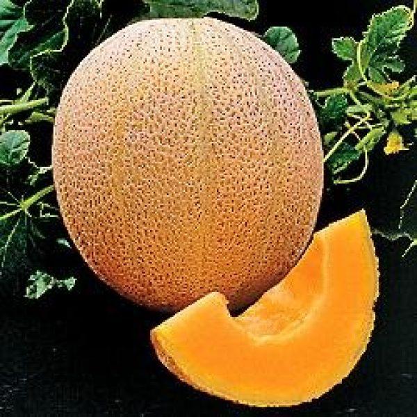 Seed Kingdom Heirloom Seed 1 seed kingdom Cantaloupe Hales Best Jumbo Melon Heirloom Vegetable 3,000 Seeds