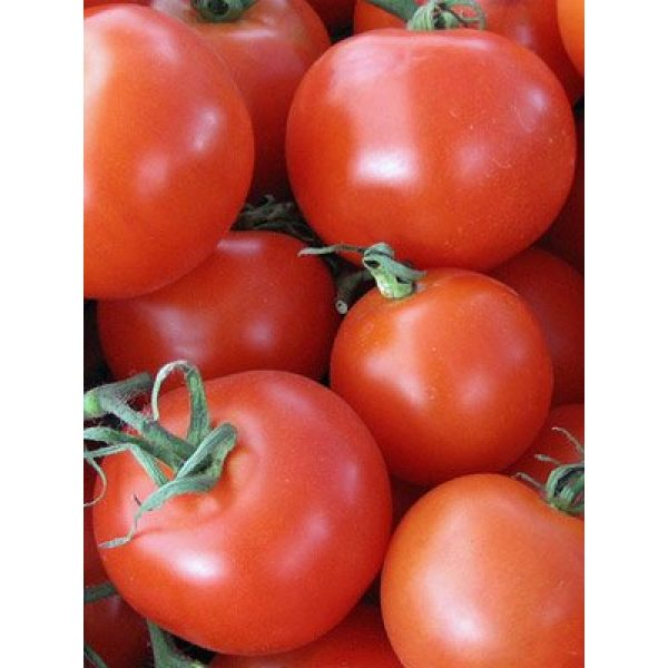 "Isla's Garden Seeds Organic Seed 2 ""Homestead"" Tomato Seeds, 150+ Premium Heirloom Seeds, On Sale & Gardeners Choice Top Seller, (Isla's Garden Seeds), Non GMO Organic, 90% Germination, Highest Quality 100% Pure"