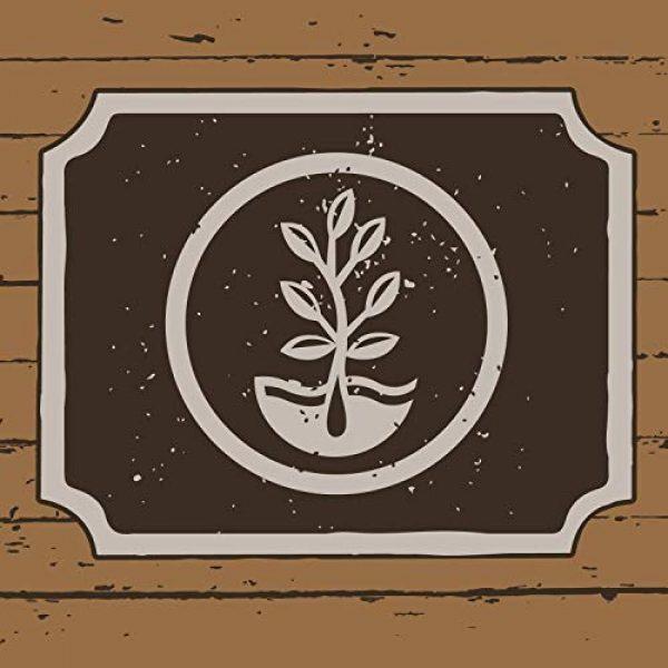 Mountain Valley Seed Company Organic Seed 7 7 Varieties Non-GMO Organic Heirloom Tomato Seeds - Chadwick Cherry Tomato Seeds, Green Zebra, Black Krim Tomato Seeds, Golden Queen, Cherokee Purple Seeds, Brandywine Pink Tomato Seeds, Pineapple