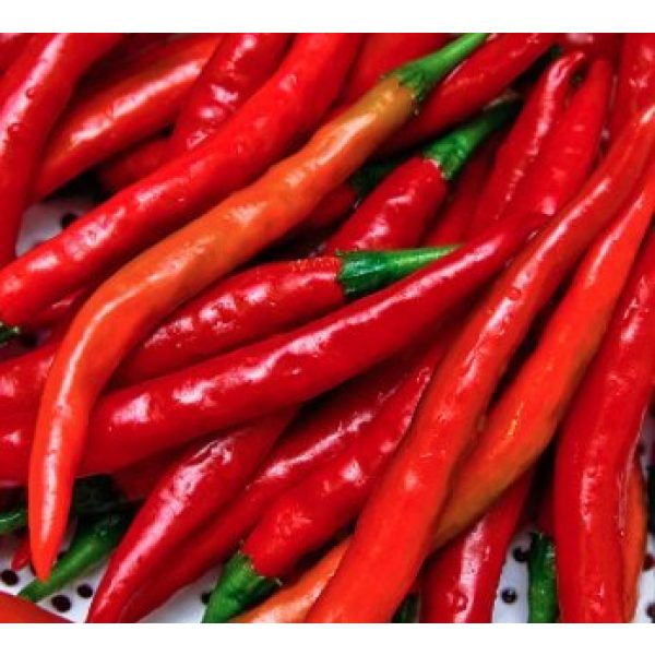 Isla's Garden Seeds Heirloom Seed 4 Cayenne Pepper Seeds, Long Red Thin Cayenne Peppers, 125+ Premium Heirloom Seeds, Fantastic Way to Spice up Your Home Garden!,(Isla's Garden Seeds) - Non GMO, 90% Germination, Highest Quality