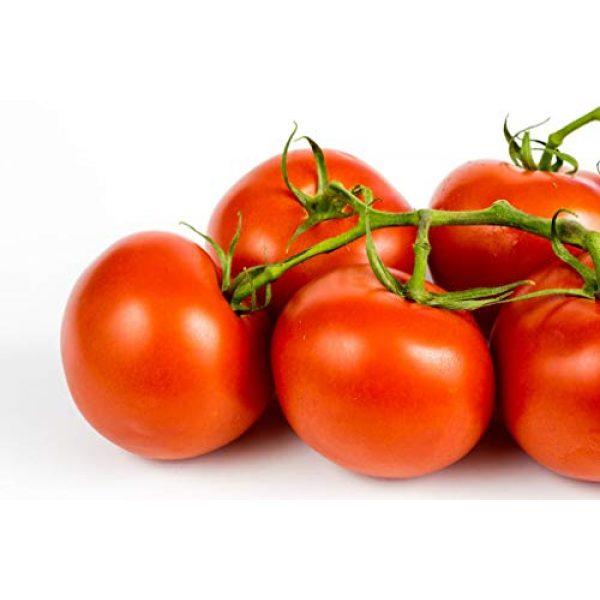 Isla's Garden Seeds Heirloom Seed 1 Ace 55 Heirloom Tomato Seeds, 150+ Premium Heirloom Seeds, Delicious Flavor! Top Seller, Lycopersicon esculentum, (Isla's Garden Seeds), Non GMO, 90% Germination, Highest Quality