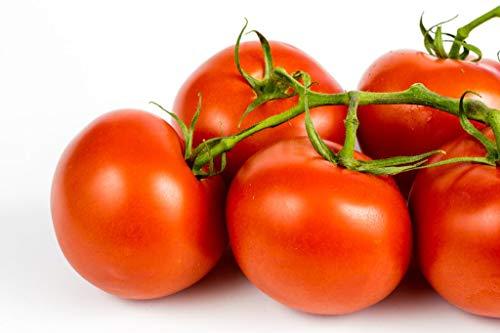 Isla's Garden Seeds  1 Ace 55 Heirloom Tomato Seeds