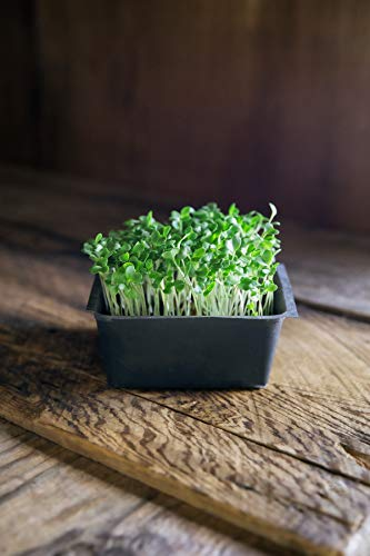 Rainbow Heirloom Seed Co.  4 Heirloom Sprouting & Microgreen Seed Variety Pack | Contains Waltham 29 Broccoli Sprouts Seeds