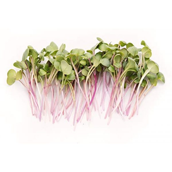 Rainbow Heirloom Seed Co. Heirloom Seed 2 Rainbow Radish Sprouting Seeds Mix | Heirloom Non-GMO Seeds for Sprouting & Microgreens | Contains Red Arrow, Purple Triton & White Daikon Radish Seeds 1 lb Resealable Bag | Rainbow Heirloom Seed Co.