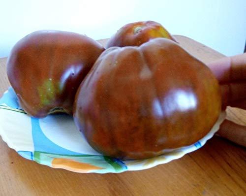 SeedsUA  6 Seeds Tomato Black Truffle Vegetable Heirloom Ukraine