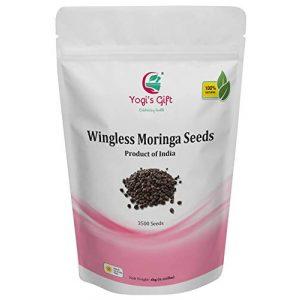 YOGIS GIFT Celebrating health Organic Seed 1 Yogi's Gift - Moringa Organic Seeds Without Wings 2.20 lbs ~Approx 3500 Seeds | Fresh & Perfect Seeds for Eating | Indian Origin | Non-GMO | Semilla de Moringa | Wingless Moringa Seeds
