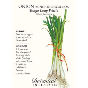 Botanical Interests Heirloom Seed 1 Onion Bunching / Scallion Tokyo Long White Seed