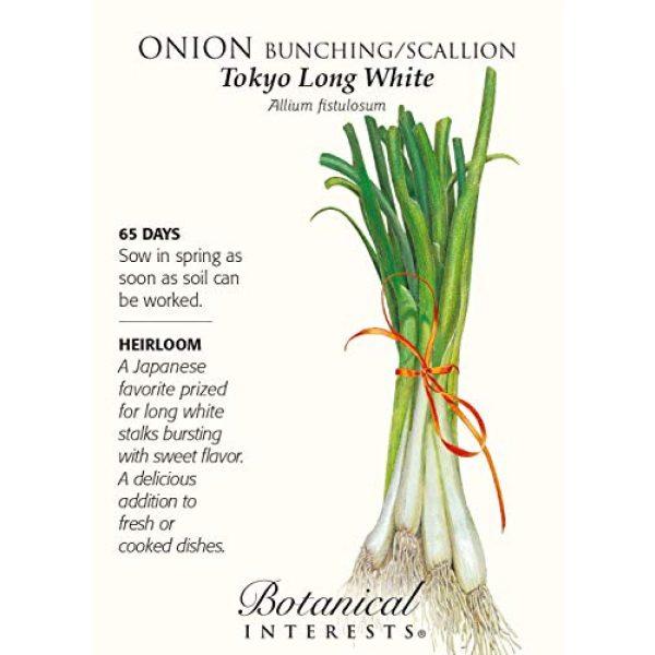 Botanical Interests Heirloom Seed 1 Onion Bunching / Scallion Tokyo Long White Seed
