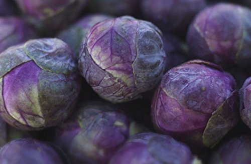 Fertile Ukraine Seeds  7 Seeds Brussels Sprouts Rosella Purple Cabbage Vegetable Heirloom Ukraine