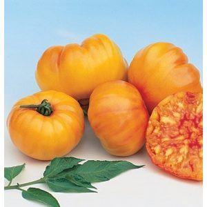 David's Garden Seeds Organic Seed 1 David's Garden Seeds Tomato Beefsteak Striped German SL2372 (Orange) 50 Non-GMO, Organic, Heirloom Seeds