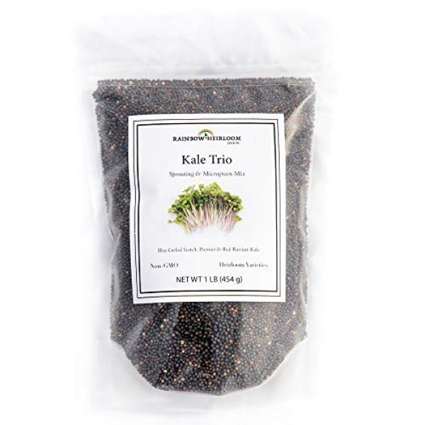 Rainbow Heirloom Seed Co. Heirloom Seed 1 Kale Trio Sprouting & Microgreen Mix | Contains Blue Curled Scotch, Premier & Red Russian Kale Seeds for Sprouting, Microgreens & Planting Outdoors | Non GMO Heirloom Seeds | Bulk 1 LB Resealable Bag