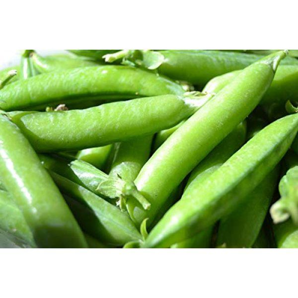 Isla's Garden Seeds Heirloom Seed 1 Sugar Ann Snap Pea Garden Seeds, 50+ Premium Heirloom Seeds, Sweet & Delicious Flavor in Your Home Garden!, (Isla's Garden Seeds), Non GMO, 95% Germination Rates, Highest Quality Seeds