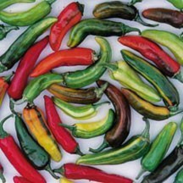 David's Garden Seeds Heirloom Seed 1 David's Garden Seeds Pepper Hot Fish 6518 (Multi) 25 Non-GMO, Heirloom Seeds