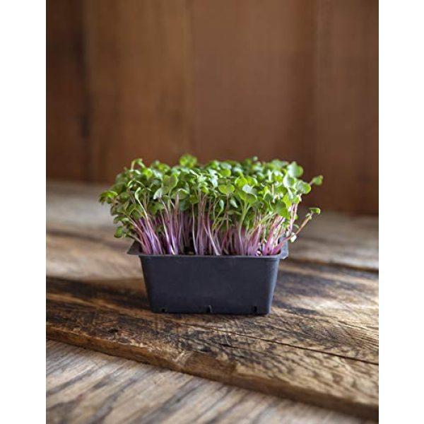 Rainbow Heirloom Seed Co. Heirloom Seed 3 Rainbow Radish Sprouting Seeds Mix   Heirloom Non-GMO Seeds for Sprouting & Microgreens   Contains Red Arrow, Purple Triton & White Daikon Radish Seeds 1 lb Resealable Bag   Rainbow Heirloom Seed Co.