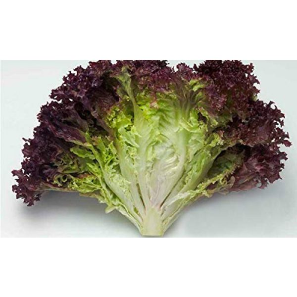 Isla's Garden Seeds Heirloom Seed 4 Red Romaine Lettuce Seeds (Super Red), 1000+ Premium Heirloom Seeds, A Fantastic Addition to Your Lettuce Garden! (Isla's Garden Seeds), Non GMO Survival Seeds, 99.7% Purity
