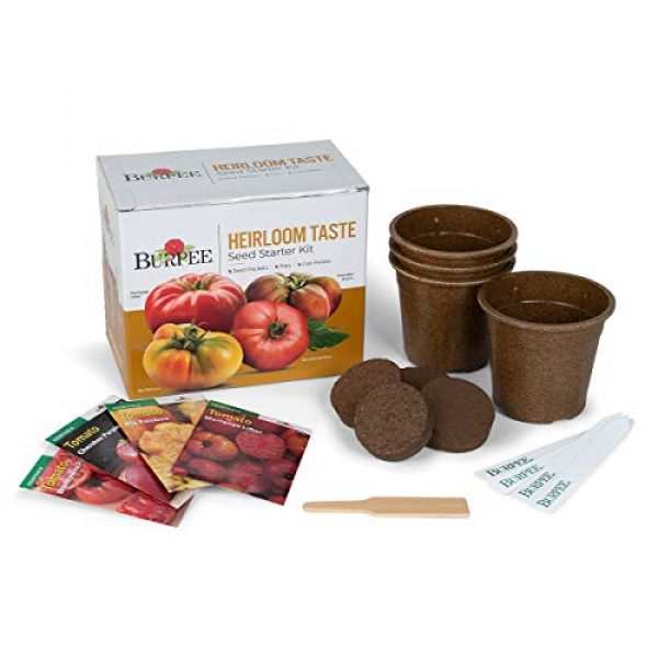 Burpee Heirloom Seed 4 Burpee Heirloom Taste Starting Kit Mortgage Lifter, Cherokee Purple, Big Rainbow & Brandywine Pink | 4 Beefsteak Tomato Seed Packets, 4 Pots, 4 Coir Pellets & 4 Plant Markers