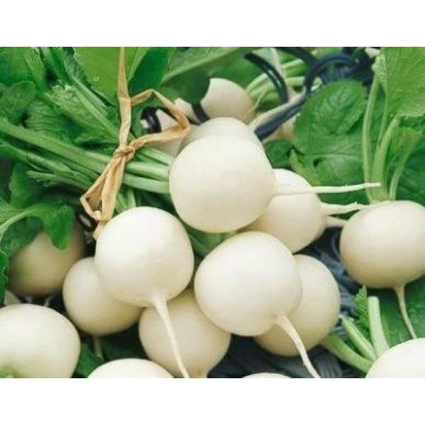 David's Garden Seeds Heirloom Seed 1 David's Garden Seeds Radish Hailstone 1143 (White) 200 Non-GMO, Heirloom Seeds