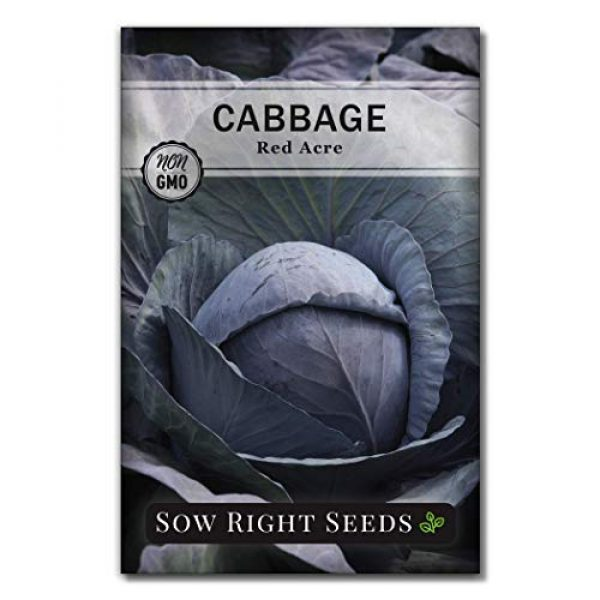 Sow Right Seeds Heirloom Seed 4 Sow Right Seeds - Cabbage Seed Collection for Planting - Savoy Perfection, Red Acre, Golden Acre, and Michihili (Nampa) Cabbages, Instruction to Plant and Grow a Non-GMO Heirloom Home Vegetable Garden