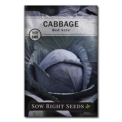and Michihili (Nampa) Cabbages