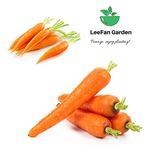 LeeFan Garden  2 500+ Carrot Seeds for Garden Planting