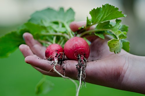 Black Duck Brand  3 Set of 35 Assorted Vegetable & Herb Seeds 35 Varieties Create a Deluxe Garden All Seeds are Heirloom