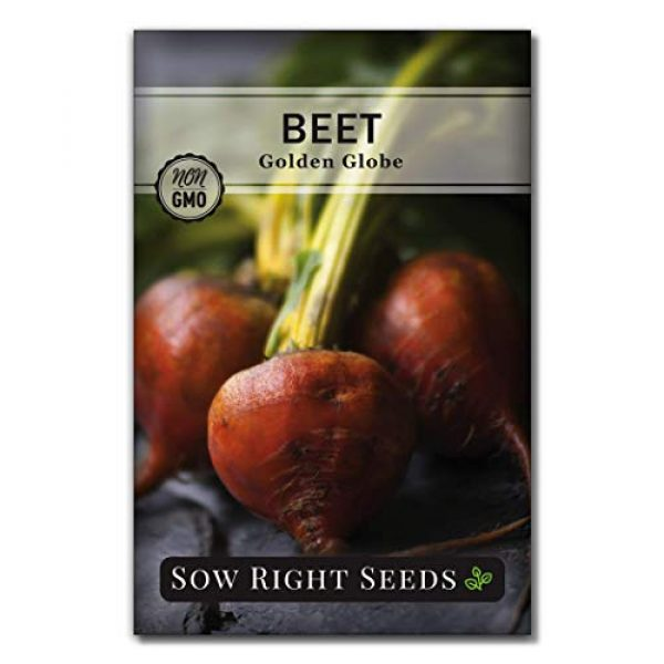 Sow Right Seeds Heirloom Seed 2 Sow Right Seeds - Beet Seed Collection for Planting - Detroit Dark Red, Golden Globe, Chioggia, and Cylindra Varieties Non-GMO Heirloom Seeds to Plant a Home Vegetable Garden - Great Gardening Gift