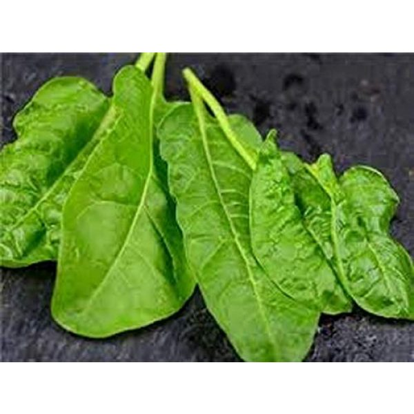 Isla's Garden Seeds Heirloom Seed 4 Perpetual Spinach Seeds (Swiss Chard), 300+ Premium Heirloom Spinach Seeds, Beautiful Large Leaves of Spinach! Fantastic Addition! (Isla's Garden Seeds), Non GMO, 80-85% Germination, Highest Quality