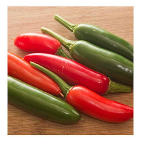 Isla's Garden Seeds  1 Serrano Hot Pepper Seeds