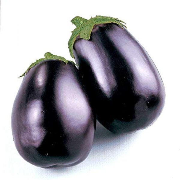 Isla's Garden Seeds Organic Seed 1 Black Beauty Eggplant Seeds, 100+ Premium Heirloom Seeds, Fantastic Addition to Home Garden!, (Isla's Garden Seeds), Non GMO Organic, 90% Germination Rates, Highest Quality, 100% Pure
