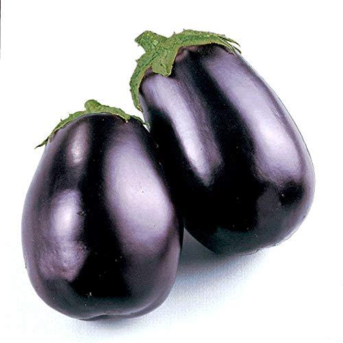 Isla's Garden Seeds  1 Black Beauty Eggplant Seeds